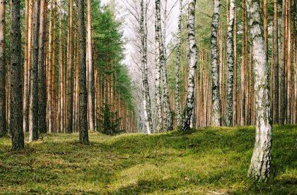 """""""Pozostaną tylko najsilniejsze"""". W kwietniu wycinka drzew w kolejnej gminie powiatu lublinieckiego"""