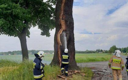 Potężne uderzenie pioruna w gminie Ciasna. Ucierpiał ponad 300-letni znany pomnik przyrody [FILM]